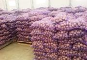 Продаем картофель по всей России оптом со склада.